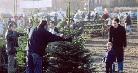christmas trees chesham fresh real trees tree farm chesham amersham