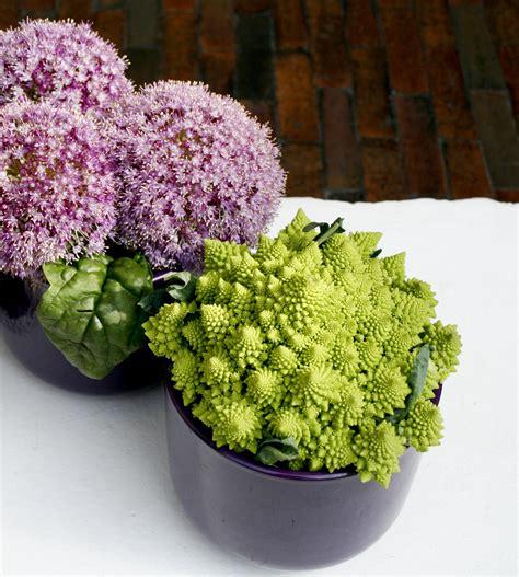 fiori d aglio fiori d aglio e cavolfiore romanesco geometrie della