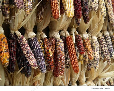 pictures of color picture of color corn