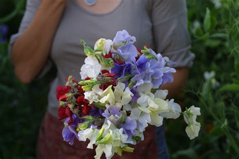 hardest flowers to grow flower focus growing great sweet peas part 2 floret