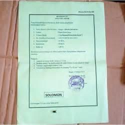 Jual Bibit Sengon F1 jual benih sengon solomon f2 cepat besar