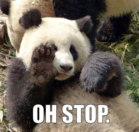 oh stop panda know your meme