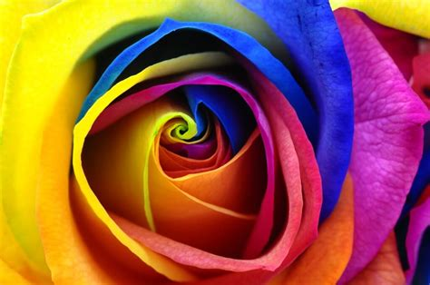 color  feng shui  rainbow  colors bring