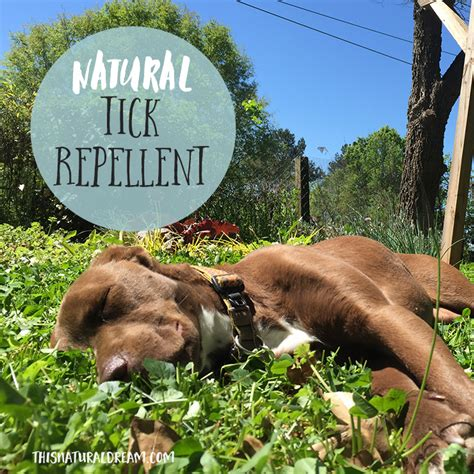 tick repellent for dogs tick repellent for dogs and this