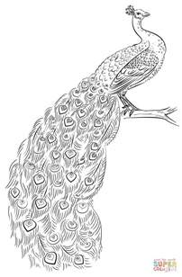 peacock coloring page peacock coloring page free printable coloring pages