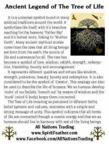 Meaning Of Trees by Best 25 Tree Of Meaning Ideas On Tree Of