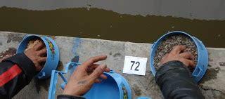 cara membuat umpan ikan mas pake belut dunia mancing umpan ikan