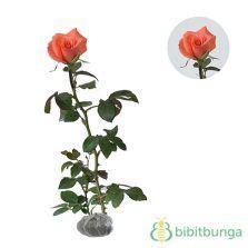 Mawar Mini Rambat Artifisialplastik Pink pot or florist s chrysanthemum chrysanthemum