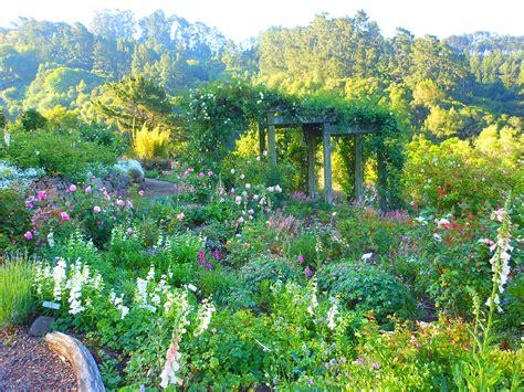 Rose Garden Gallery Uc Botanical Garden Uc Botanical Gardens