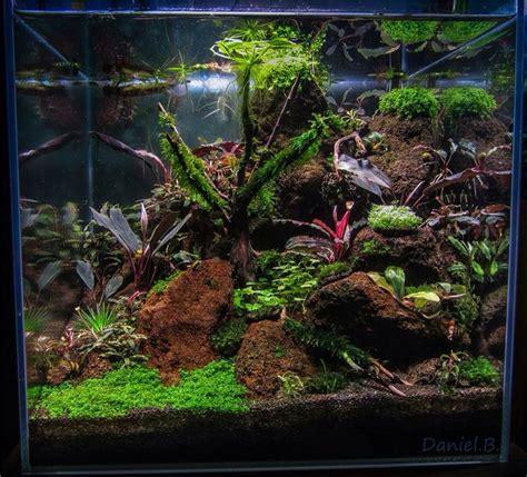 Lu Aquarium Aquascape 481 besten aquarium riparium paludarium terrarium pflanzen