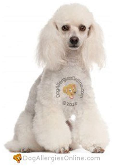 allergy friendly dogs smaller sized allergy friendly dogs