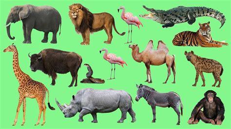 imagenes animales jungla sonidos de animales de la selva para ni 241 os animales dela