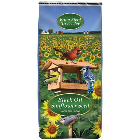black oil sunflower wild bird food 50 lb at mills fleet farm