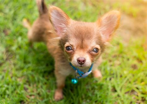 or puppy 10 most popular puppy names of 2016