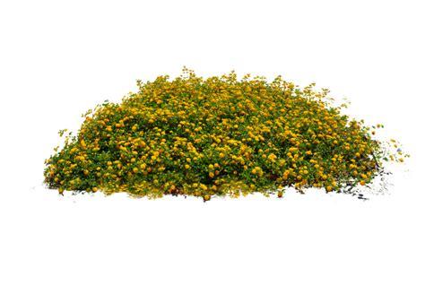 Superior Summer Garden Vegetables #6: Plants-PNG-Image-1024x688.png
