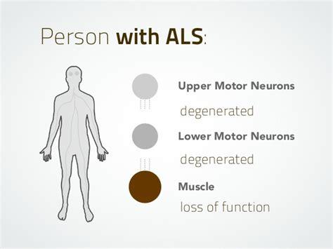 als motor neuron motor neurons lower motor