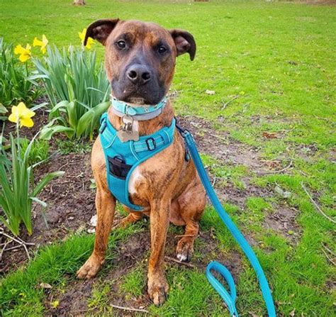 best dog harness 7 of the best harnesses for dogs who tug barkpost
