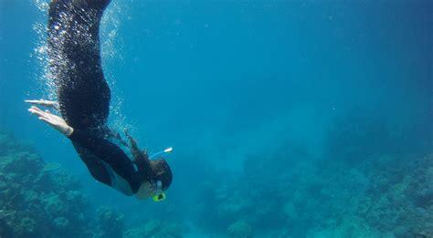 catamaran cruise great barrier reef review passions of paradise catamaran great barrier reef