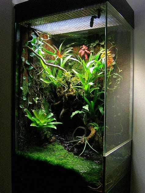 click  image  open  full size vivarium