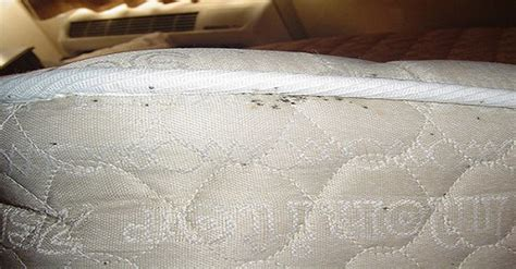 how to clean bed bugs how to get rid of dust mites inside your mattresses and