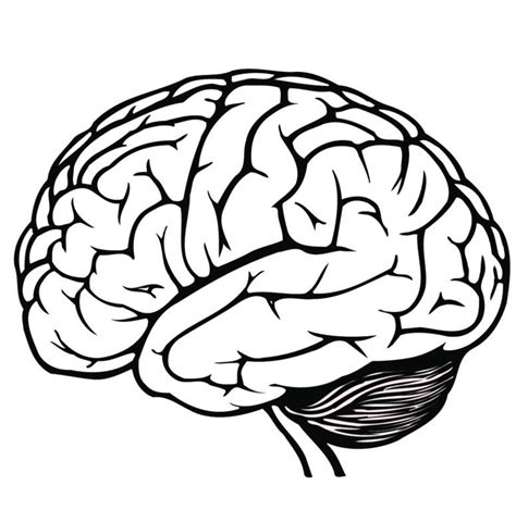 drawing of a brain google search drawing pinterest