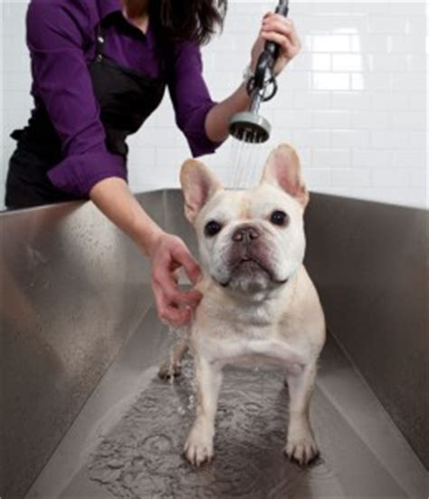 yuppie puppy oak park grooming and care tips the yuppie puppy
