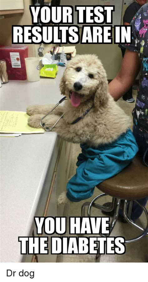 Dog Doctor Meme - your test results are in you have the diabetes dr dog