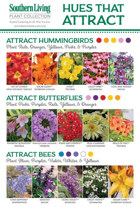 attracting butterflies and hummingbirds to your backyard birds bees and butterflies oh my attracting pollinators