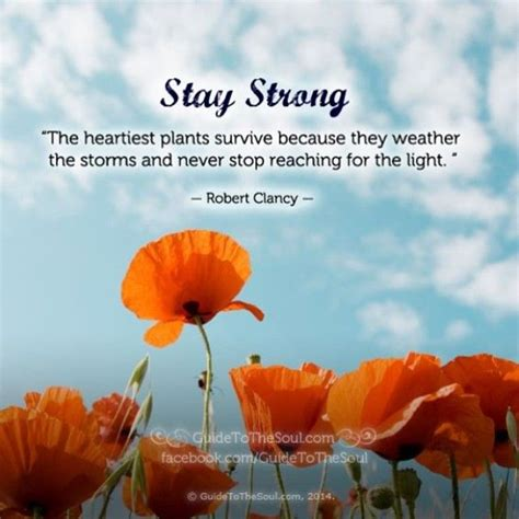 recovering the seed how to live a wholehearted books inspirational quotes images extraordinary 10