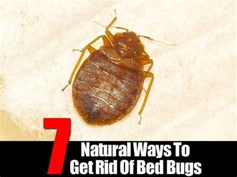 natural ways   rid  bedbugs
