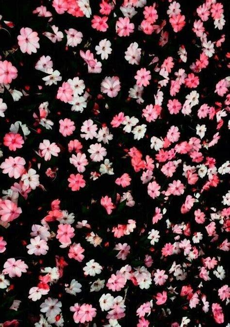 imagenes para celular de flores fondos de flores margaritas tumblr imagui fondos de