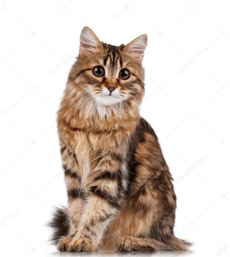 cat sock cat stock photo 169 denisnata 8575860