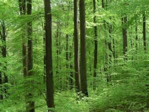 0008218439 the hidden life of trees the hidden life of trees