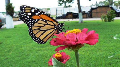 download film dokumenter fauna pictures flor y fauna de tabasco