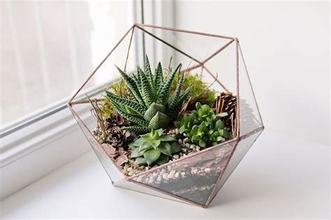 ultimate guide to terrariums