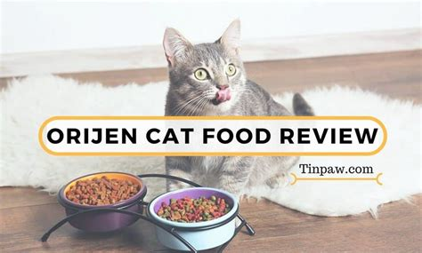 orijen food reviews orijen cat food review what you need to about the cat kitten formula tinpaw