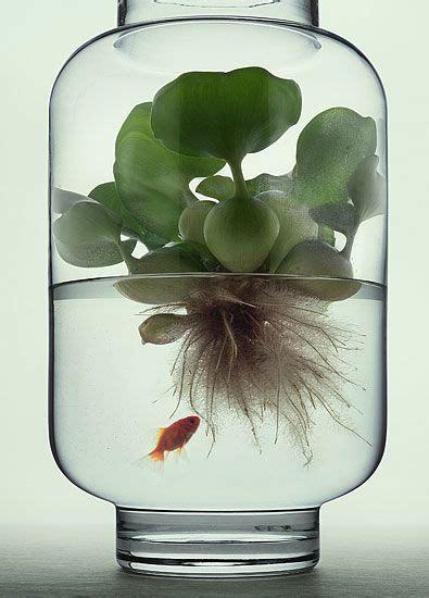 indoor water garden plants 25 best ideas about water plants indoor on