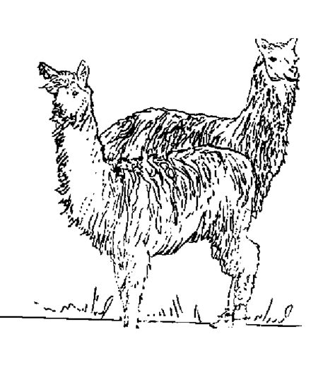 dafi alpacas coloring pages