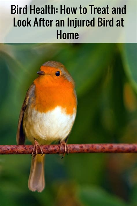 bird health how to treat and look after an injured bird