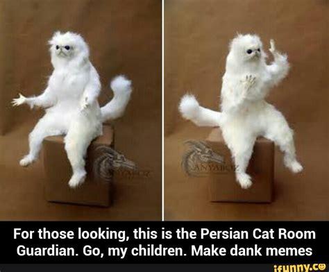 Persian Cat Meme - persiancatroomguardian ifunny