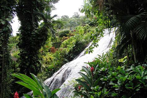 Shaw Park Botanical Gardens Stroll Through The Lush Botanical Gardens Of Jamaica