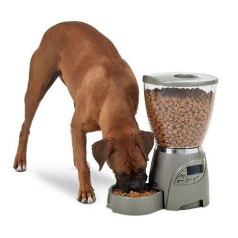 casa para perros comedero 100 comedero autom 225 tico para perros y gatos tiendanimal