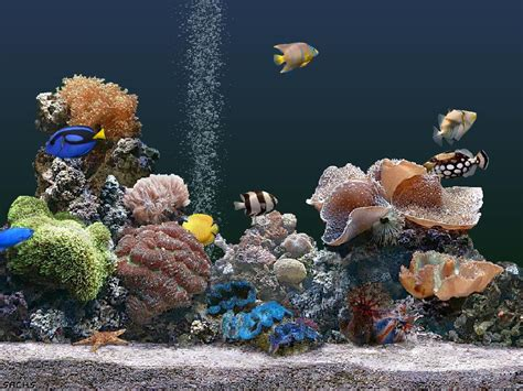 best fish screensaver free laptop wallpapers and screensavers wallpapersafari