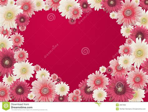 card flowers valentines flower card stock photo image 2997960