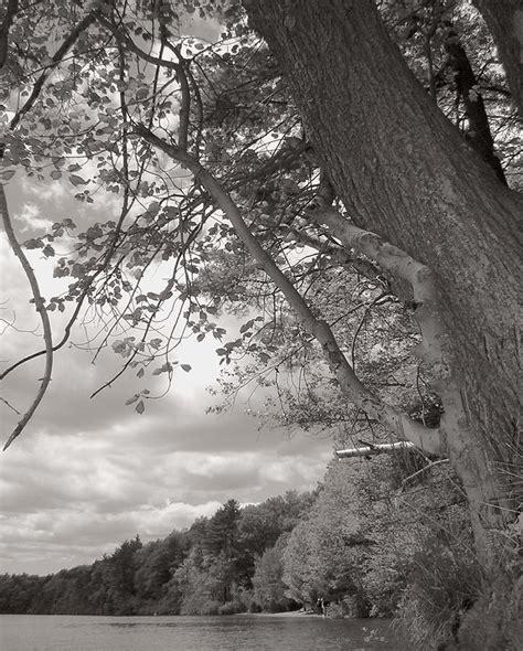 walden pond pdf walden pond photograph by weikel