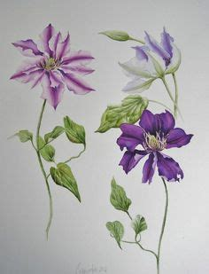 clematis drawing google search tattoos pinterest