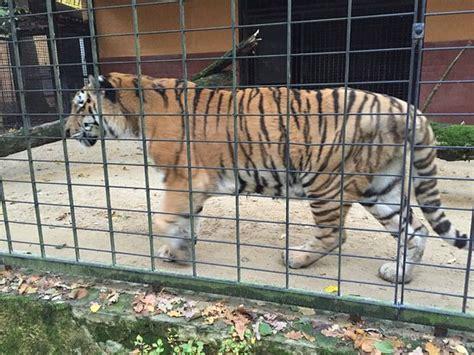 Фотографии из зоопарков. виды зоопарков