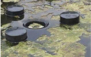 fadenalgen im schwimmteich fadenalgen im koiteich milchs urebakterien em gegen