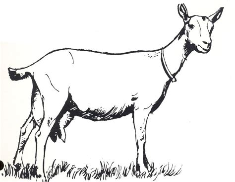 nanny goat coloring page goat clip art 13423 soap pinterest goats clip art