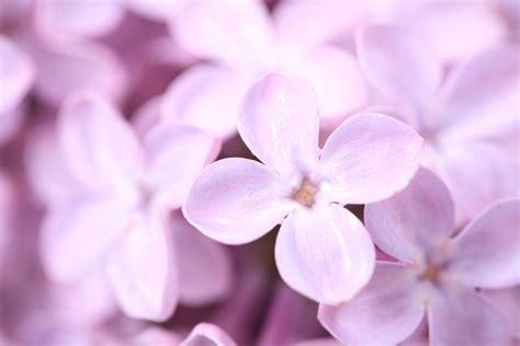 wallpaper flower petal beautiful flowers hd petals hd desktop wallpapers 4k hd